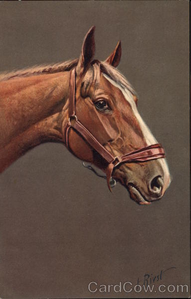 Brown Horse with Bridle Horses