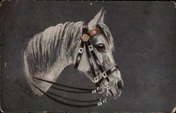 White Horse with Bridle