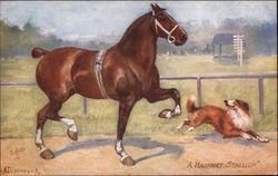 A Hackney Stallion and Dog