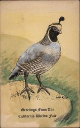 California Quail on a Rock