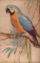 The Blue & Yellow Macaw