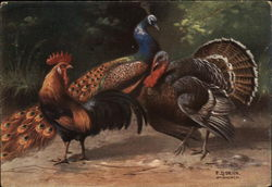 Chicken, Turkey and Peacock