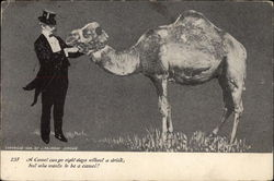 A Camel Can Go Eight Days Without A Drink, But Who Wants To Be a Camel ?