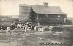 Dairy Herd and Farm in Minnesota
