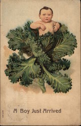 Baby in Head of Lettuce Postcard