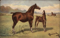 Hackney Mare and Foal