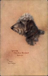 Young Dandie Dinmont Terrier by Maud West-Watson