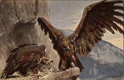 The Eagle - The King of Birds - Hans Schmidt