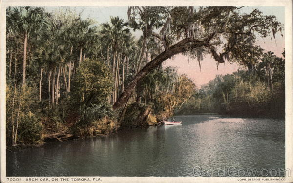 Arch Oak on the Tomoka Tomoka River Florida