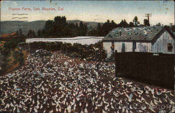 Pigeon Farm Los Angeles California