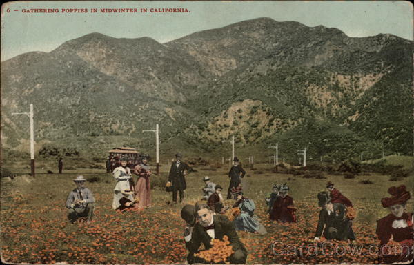 Gathering Poppies in Midwinter California