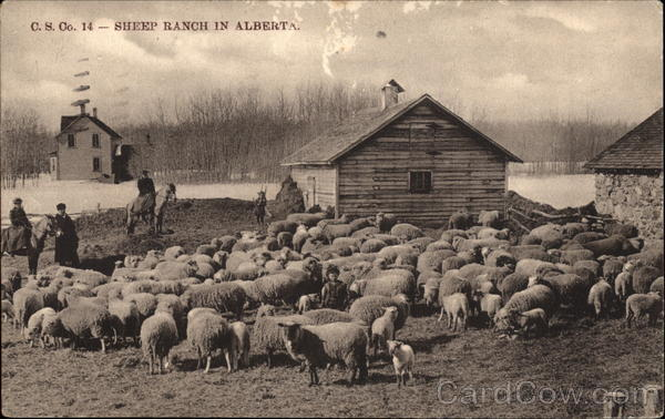 Sheep Ranch in Alberta Canada