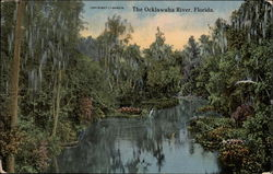The Ocklawaha River
