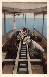 Viewing the Marine Gardens Postcard