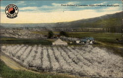 Fruit Orchard at Lewiston, Idaho-Clarkson, Washington