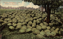 Florida Watermelon Crop Ready for Shipment
