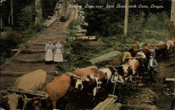 Hauling Logs over Skid Road with Oxen