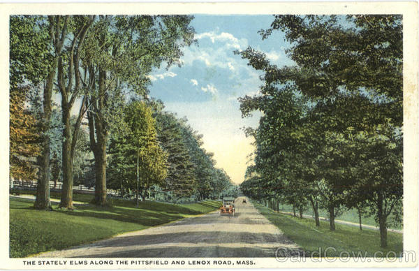 The Stately Elms Along The Pittsfield And Lenox Road Massachusetts