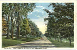 The Stately Elms Along The Pittsfield And Lenox Road