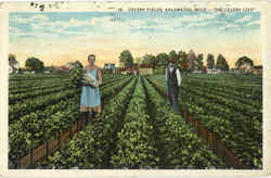 Celery Fields Postcard