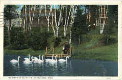 The Swan In Old River Postcard
