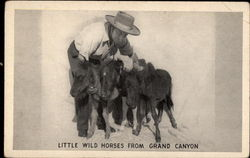 Little Wild Horses from Grand Canyon