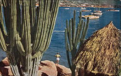 View of Coast and Cacti Postcard