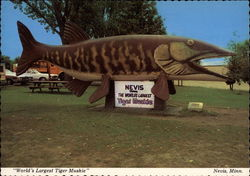 World's Largest Tiger Muskie Postcard