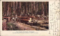 Logging Tall Timber