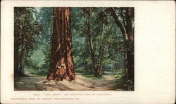 """Gen. Grant,"" Big Redwood Tree of California"
