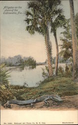 Alligator on the shore