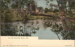 On The Tomoka River