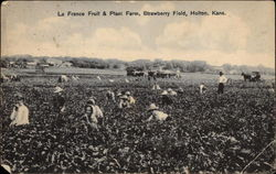 La France Fruit & Plant Farm, Strawberry Field