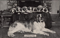 Litter of Saint Bernard Puppies