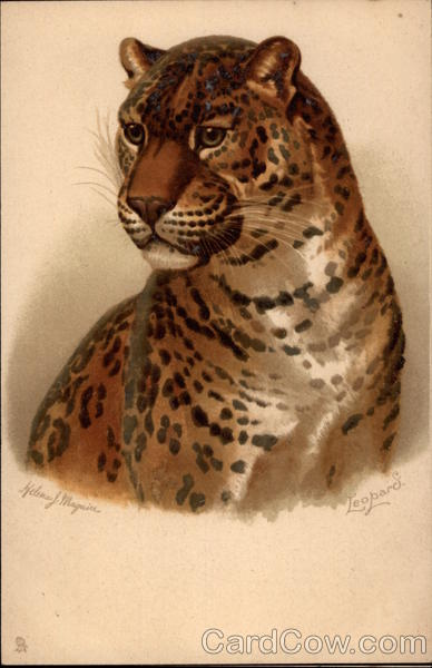 Leopard Helena Maguire Artist Signed