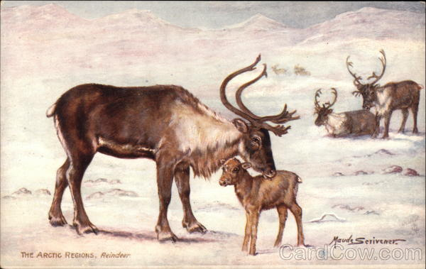 The Arctic Regions, Reindeer
