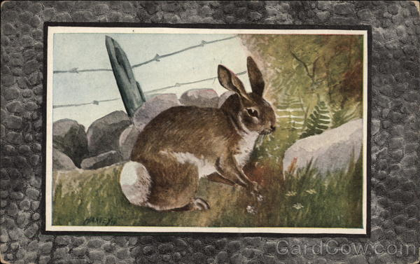 Gray Rabbit or Cottontail