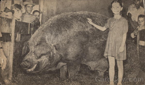 The World's Largest Hog Pigs