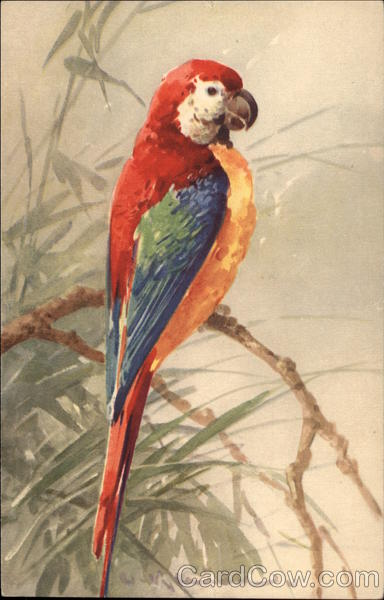 Red, Green, Yellow and Blue Parrot on Branch C. Klein