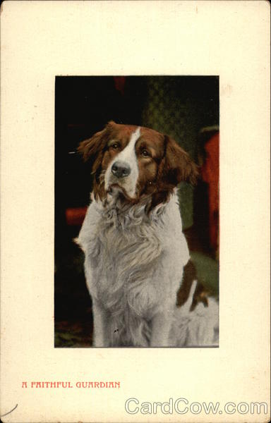 A Faithful Guardian Saint Bernards