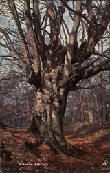 Oil Painting of Trees Known as Burnham Beeches