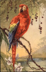 Red Parrot on a Branch