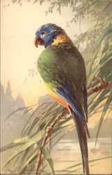 Blue, Green and Yellow Parrot on a Branch