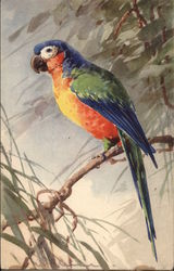 Blue, Green, Orange and Yellow Parrot