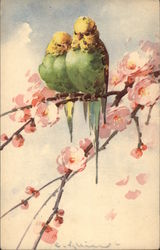 Two Budgies on a Branch With Pink Flowers