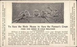 Feed the Birds in Cold Weather