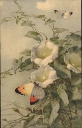 Two Butterflies on White Flowers