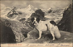 St. Bernard in Mountain Scene