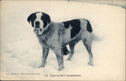 Small St. Bernard in the Snow