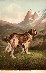 St. Bernard Dog in Alpine Setting